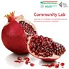 Community Lab. Innovare la Pubblica Amministrazione attraverso processi collettivi
